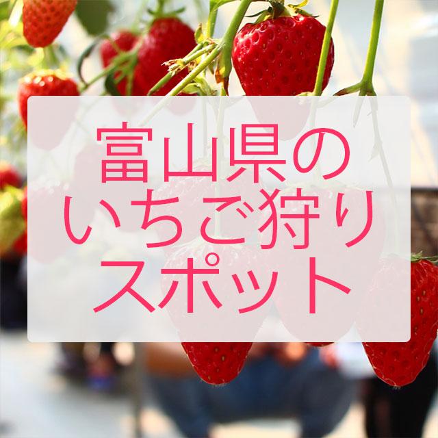 まだ間に合う!デートや家族で 富山県でいちご狩りができる場所一覧 / 料金や場所まとめ