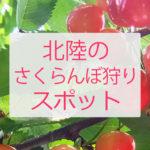 デートや家族で 福井県・石川県・富山県でさくらんぼ狩りができる場所一覧 / 料金や場所まとめ