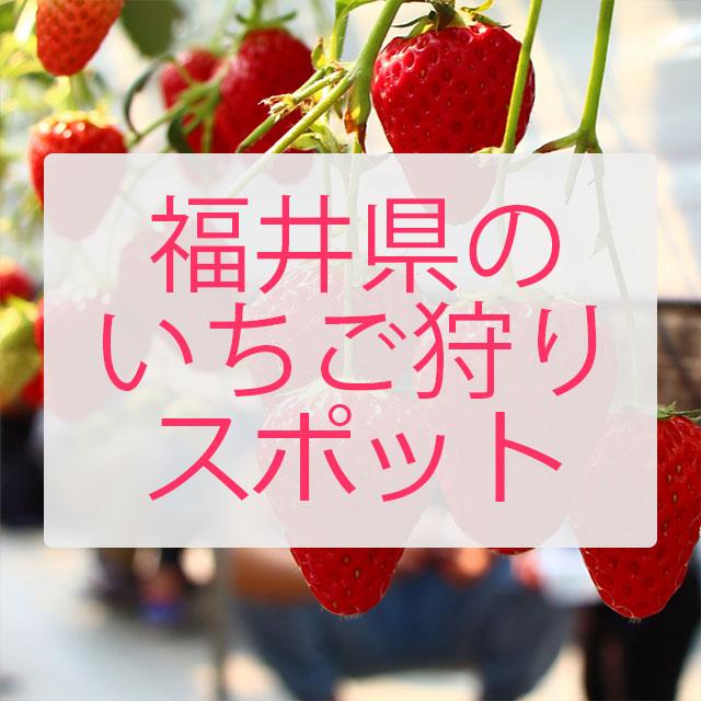 デートや家族で 福井県でいちご狩りができる場所一覧 / 料金や場所まとめ