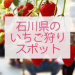 デートや家族で 石川県でいちご狩りができる場所一覧 / 料金や場所まとめ