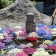 目を奪われる紫陽花の手水舎 津幡、倶利伽羅不動寺で美しい紫陽花を楽しんできました。